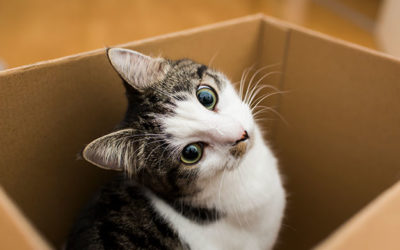 Tips for Moving to a New Home with Pets….